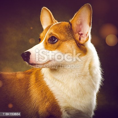 Dog image with art photo filter