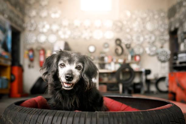 hund in einem bett mit reifen - hundezubehör diy stock-fotos und bilder