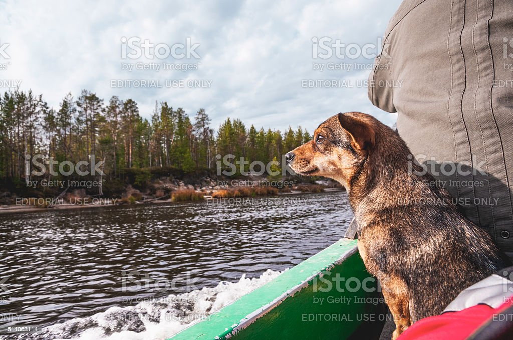 Dog in a boat on a river in Western Siberia stock photo