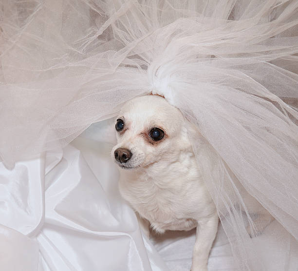 Cтоковое фото Собака в Брайдалвейл