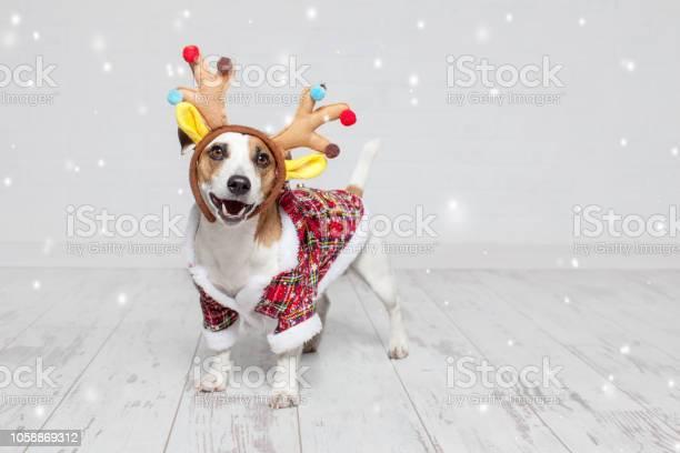 Dog in a christmas costume picture id1058869312?b=1&k=6&m=1058869312&s=612x612&h=di5rfgto0uvnl7wlpig0kuxedo1ehrbeiyvgaqico9g=