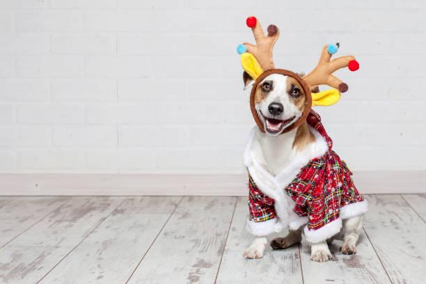 Hund in einem weihnachtskostüm – Foto