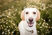 Mutt dog in the fields.