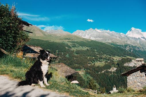 Dog in a mountain village in Valais valley in Switzerland