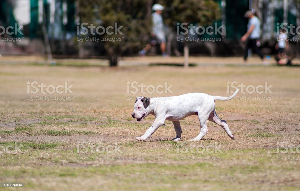 Dog in a park playing stock photo