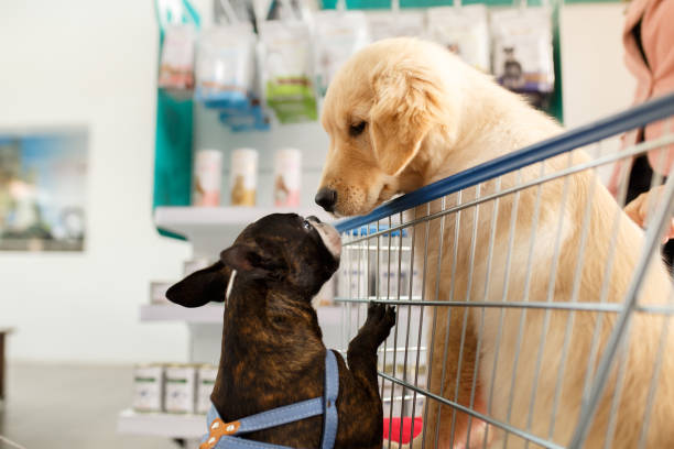 dog in a shopping cart - pet shop and dogs not cats stock pictures, royalty-free photos & images
