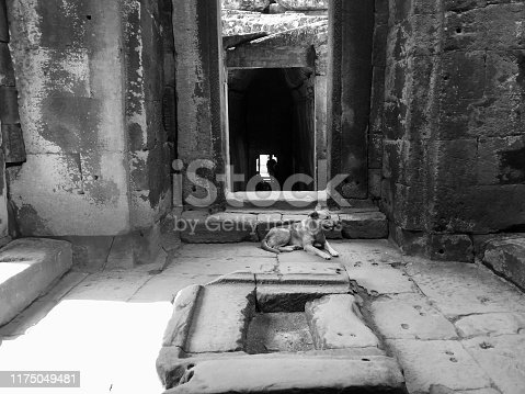 istock Dog in a temple 1175049481