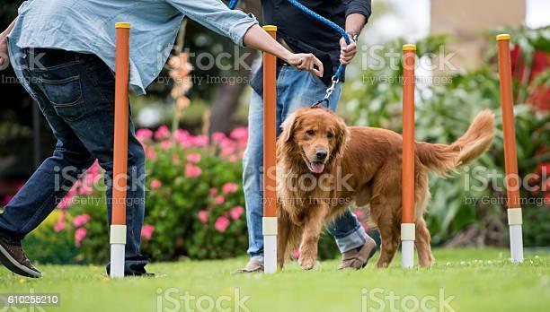 Dog in a training class picture id610255210?b=1&k=6&m=610255210&s=612x612&h=myjibjg7g2tbiqufgv0jrhdhvcf7yea8f3xe7hlj7qi=