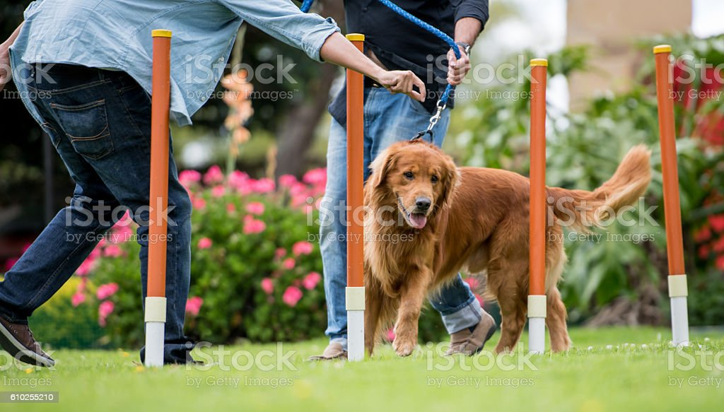 Dog in a training class stock photo