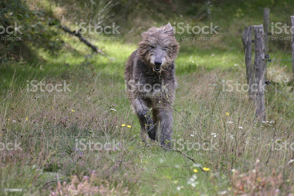 Dog in action stock photo
