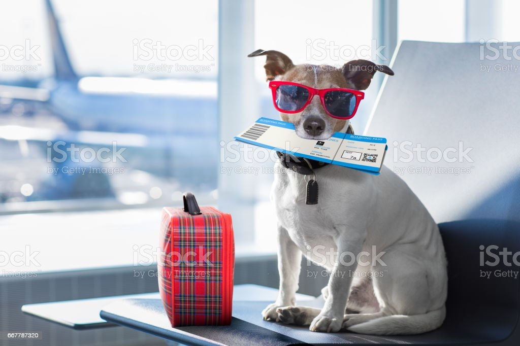dog in airport terminal on vacation stock photo