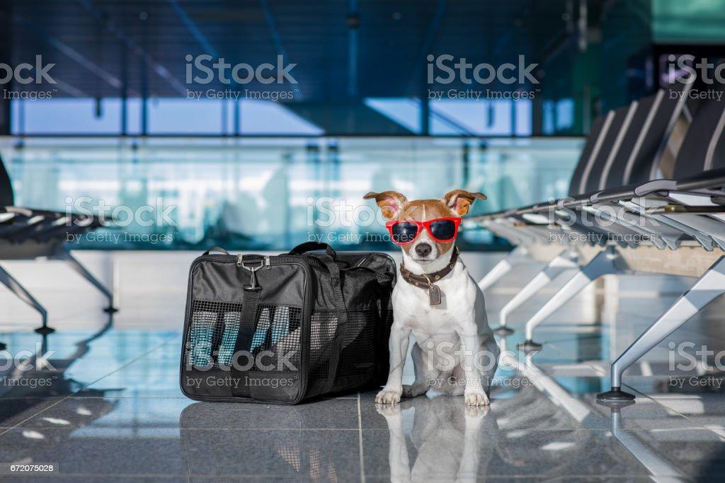 chien dans l'aérogare en vacances - Photo
