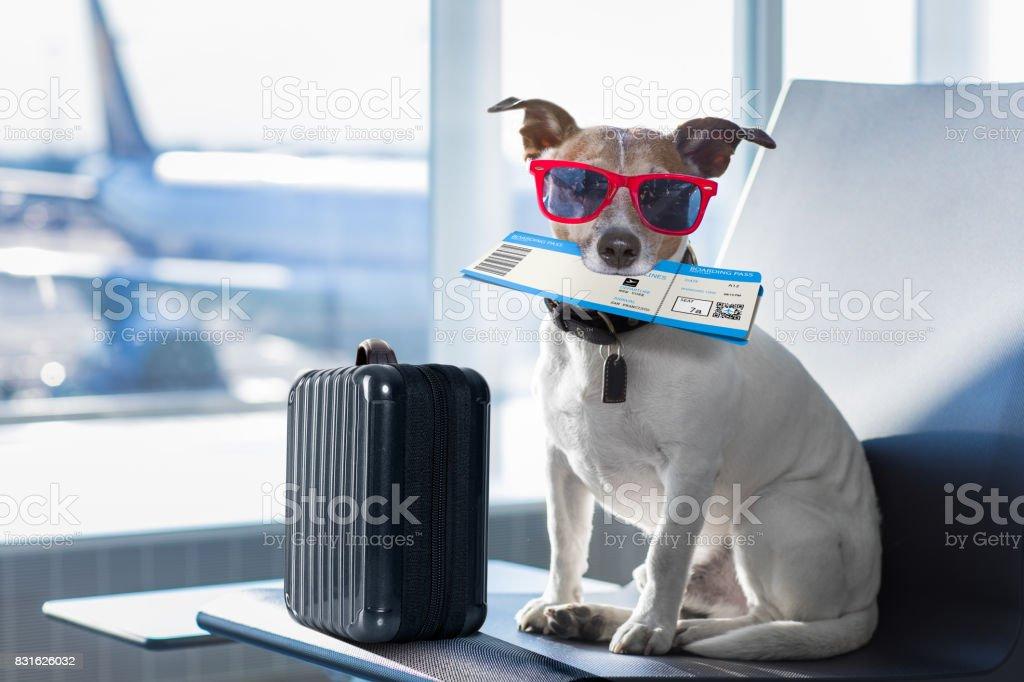 Hund im Flughafen-terminal im Urlaub – Foto