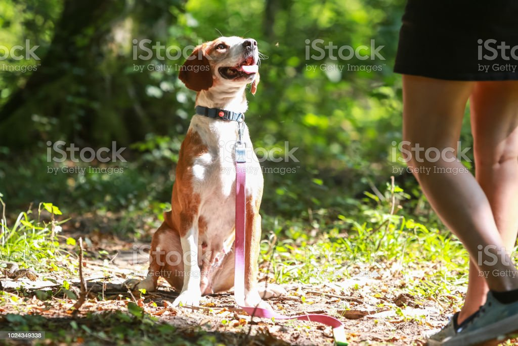 Dog in an animal shelter stock photo
