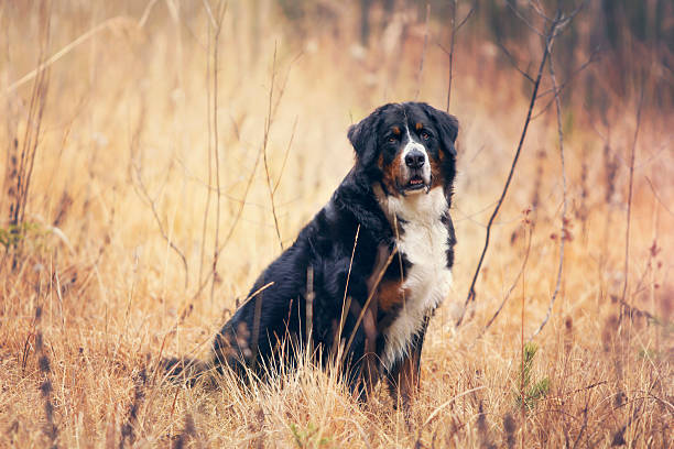 Dog in autumn meadow stock photo
