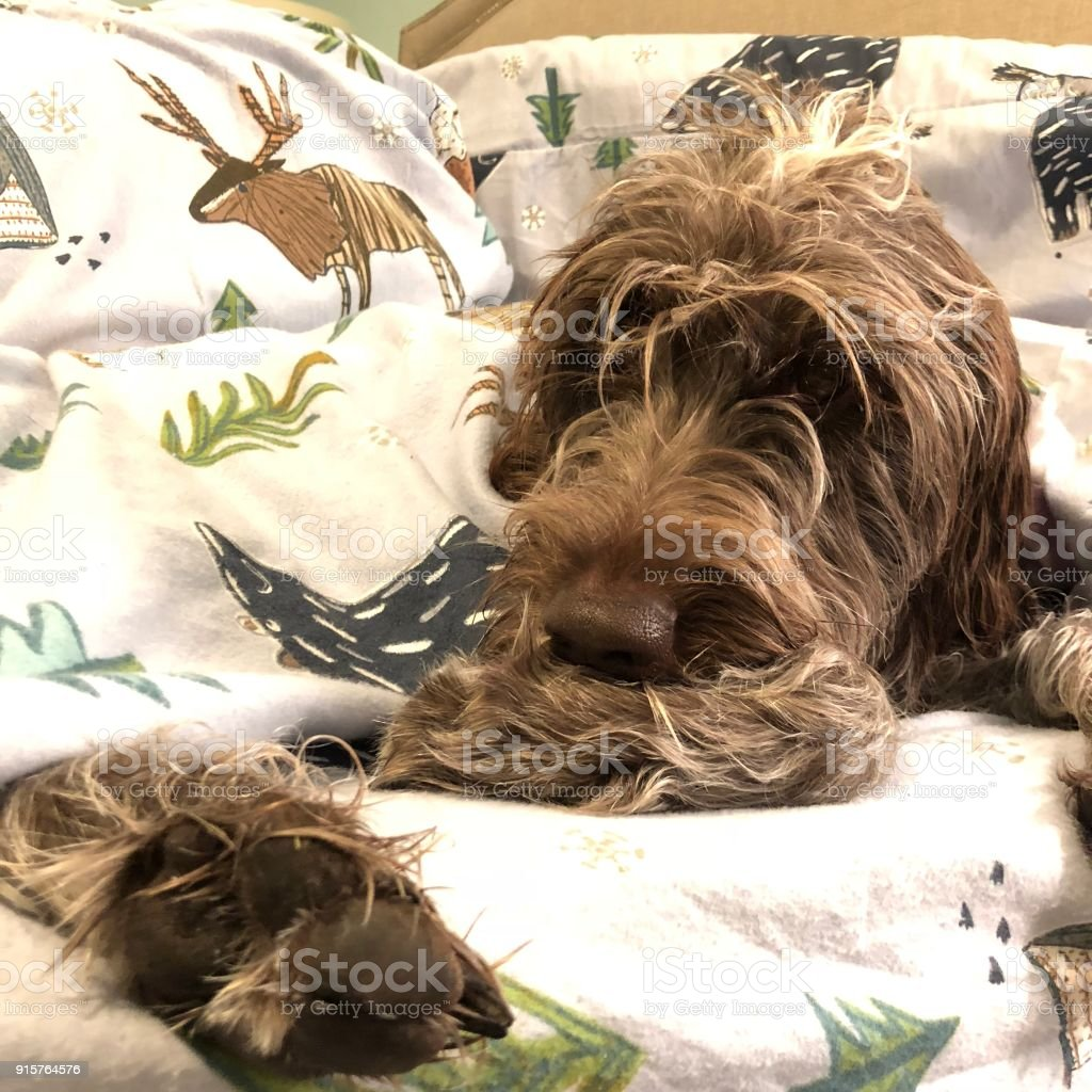 Dog in bed stock photo