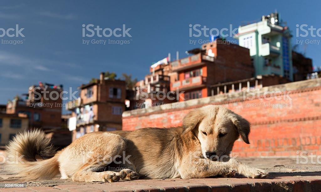 dog in Bhaktapur city stock photo
