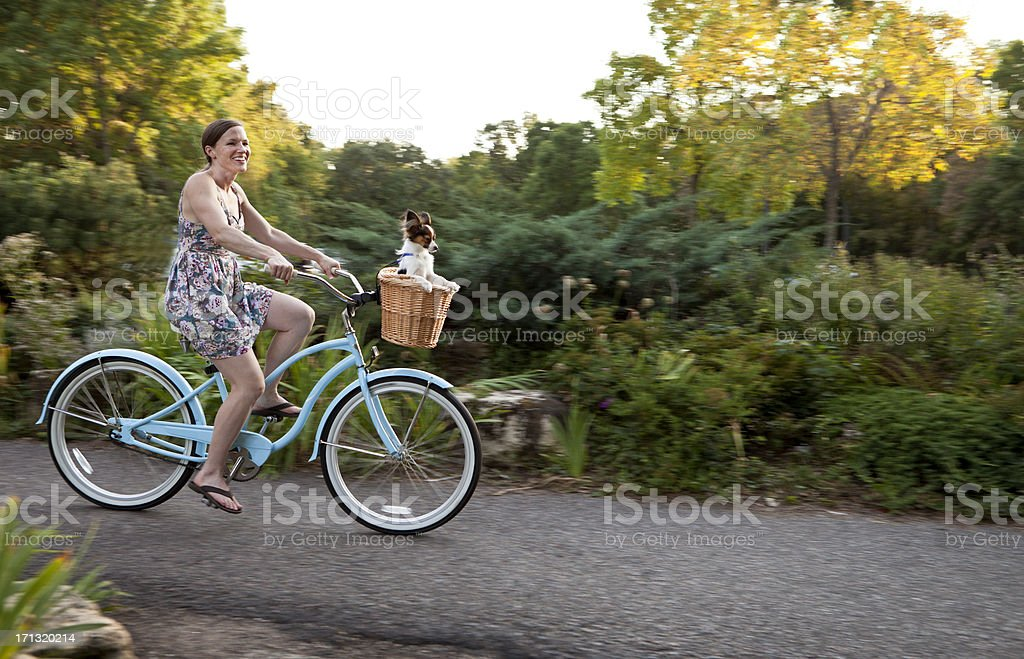 Dog in Bicycle Basket royalty-free stock photo