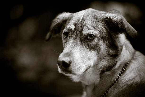 Dog in Black and White stock photo