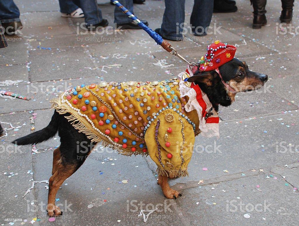 Dog in Carnival Costume stock photo