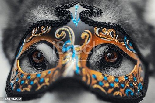 Dog in carnival mask