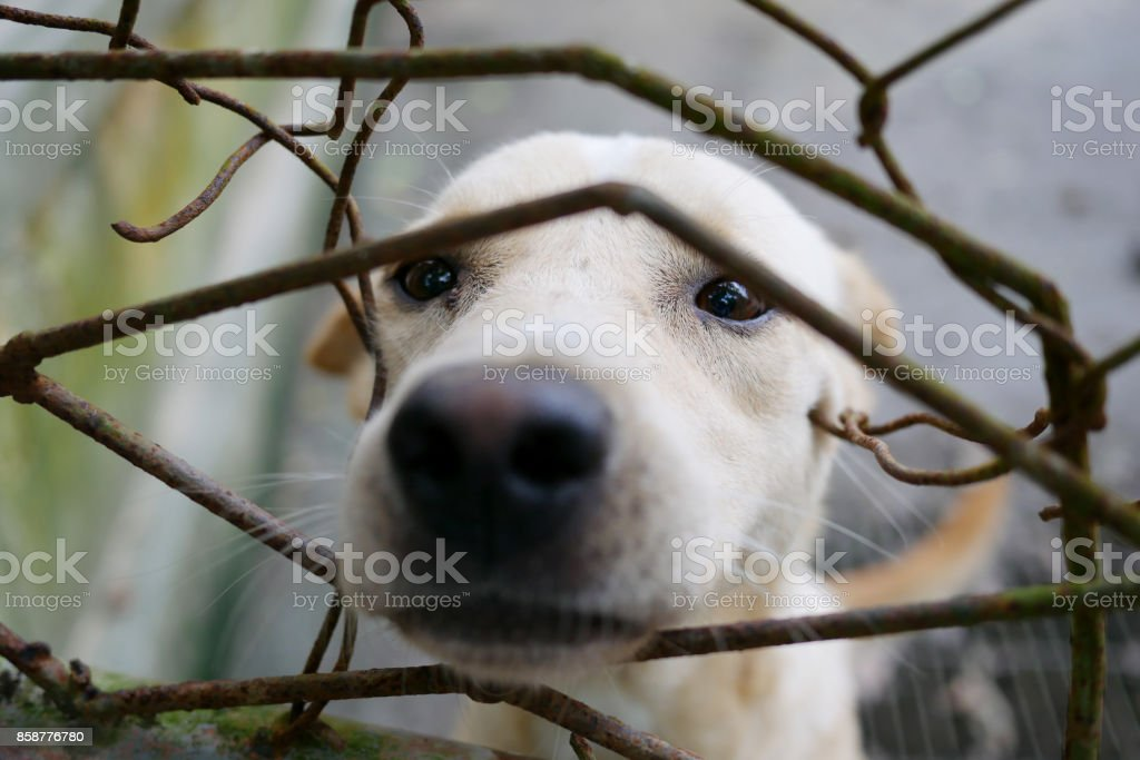 Dog in Charity Shelter stock photo