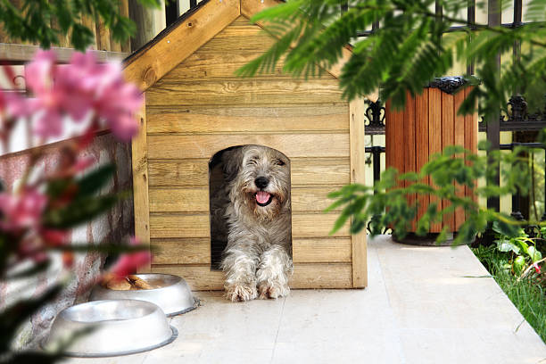 dog in dog house - havaneser in not stock-fotos und bilder