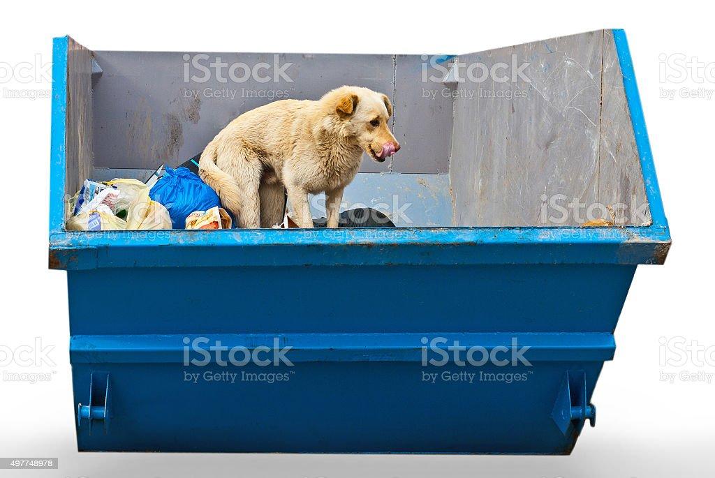 dog in dustbin stock photo