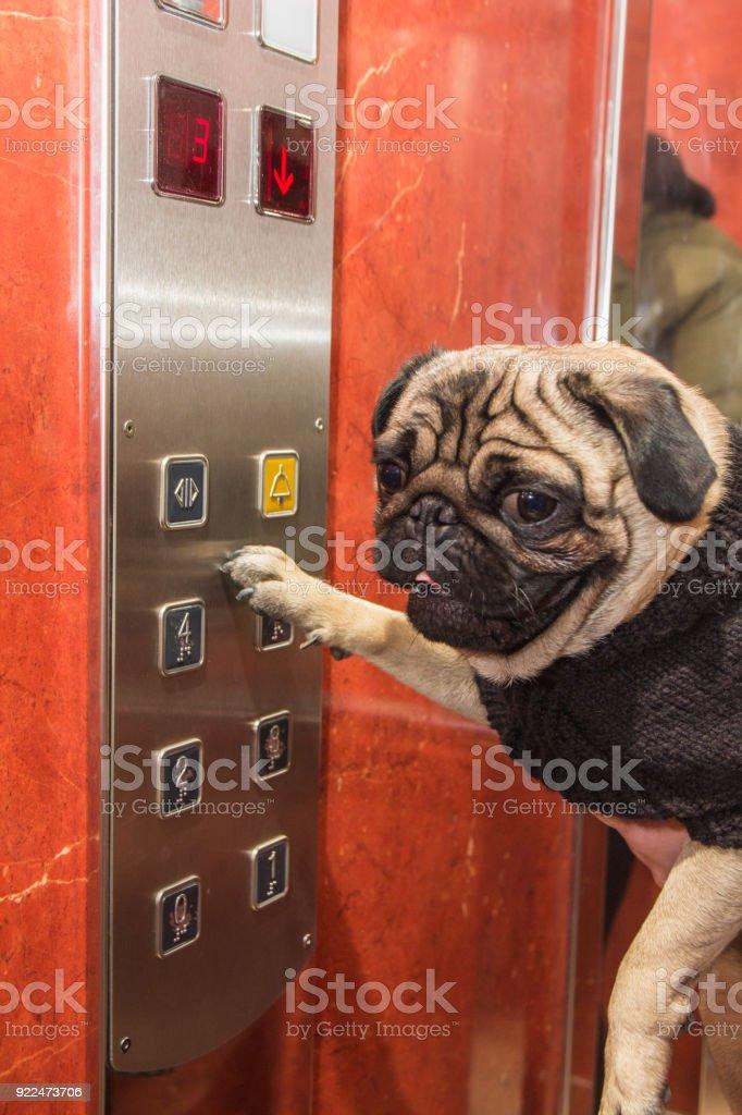 Dog in elevator stock photo