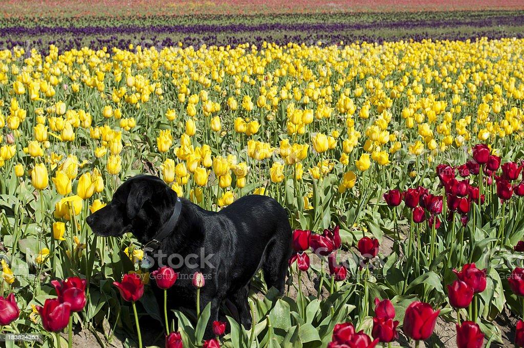 Dog in Flower Farm royalty-free stock photo