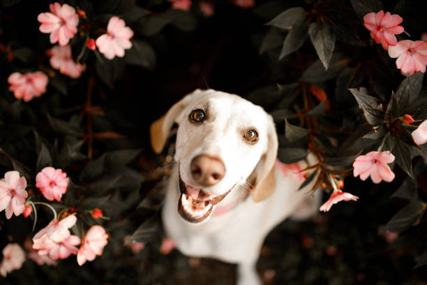 Dog in flowers stock photo