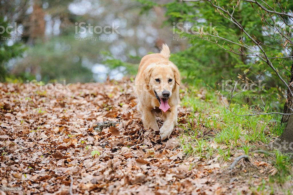 Dog in forest stock photo