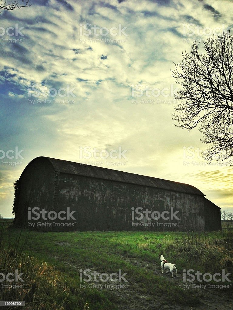 Dog In front of An Old Abandoned Barn at Sunset royalty-free stock photo