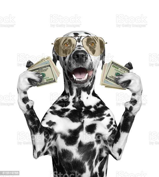 Dog in glasses holds lot of money picture id515519288?b=1&k=6&m=515519288&s=612x612&h=eqfuis3eeutvaioxagm2ctxjdfglwi9l4am7hazre6q=