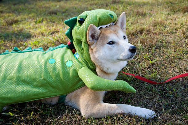 Dog in Green Halloween Costume, Eaten by Dinosaur Lizard stock photo