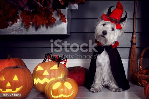 istock Dog in Halloween Dracula costume 1027751920
