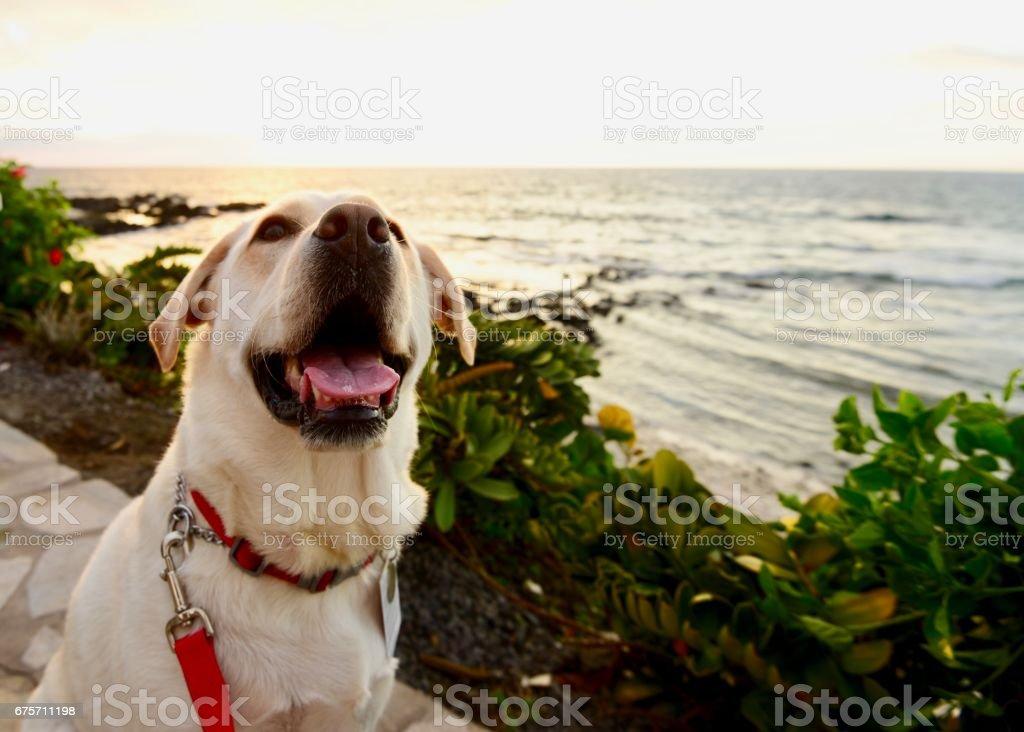 在夏威夷的狗 免版稅 stock photo