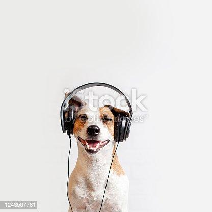 Dog in headphones listening to music. Happy pet