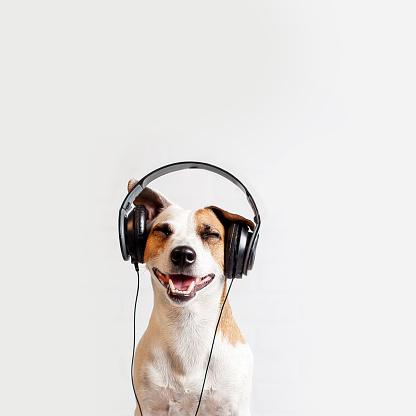 Dog in headphones listening to music