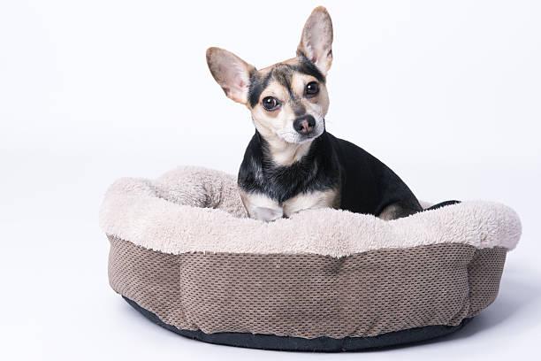 dog in its bed - katzen kissen stock-fotos und bilder