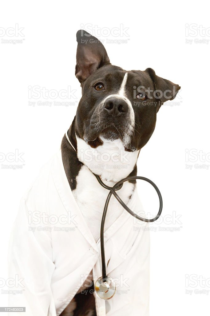 Dog in lab coat royalty-free stock photo