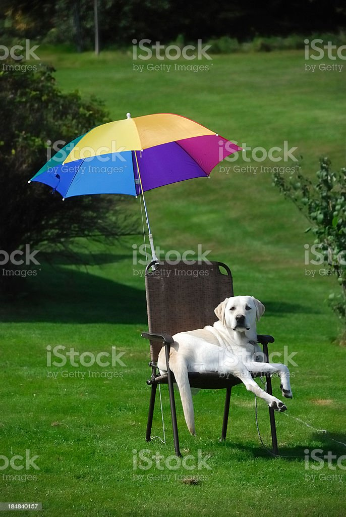 \'A dog relaxes in a lawn chair with an umbrella on a hot summer day...