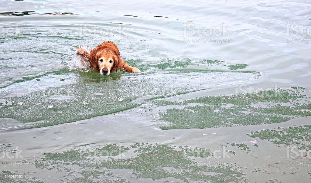 Dog in Melting Ice stock photo