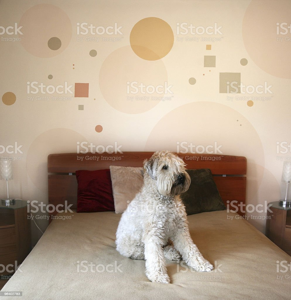 Dog in modern bedroom - Royalty-free Bed - Furniture Stock Photo