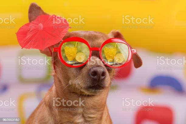 Foto de Cão De Óculos Vermelhos Com Um Cocktail Sinal Na Orelha Reflexo Em Óculos Tropical Cocktail Sobre Fundo Colorido Brilhante O Conceito De Férias E Turismo e mais fotos de stock de Animal