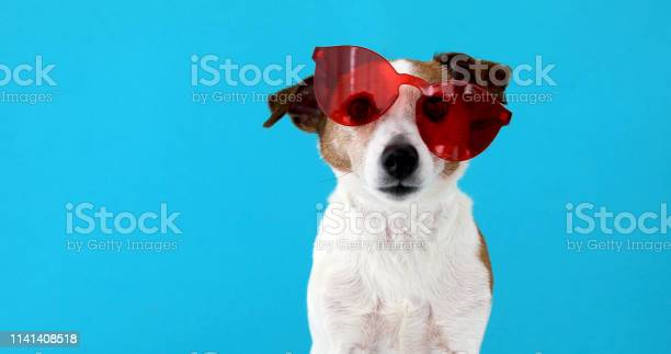 Dog in red sunglasses picture id1141408518?b=1&k=6&m=1141408518&s=612x612&h=5qo0avcvs0ydfribxz86qyerlxir20ouakn7ytevw2a=