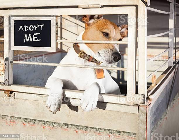 Dog in shelter cage picture id544111674?b=1&k=6&m=544111674&s=612x612&h=dc cgs 8p7qsur1pwa7esn75ov5dazz8jxipl2n1sq4=