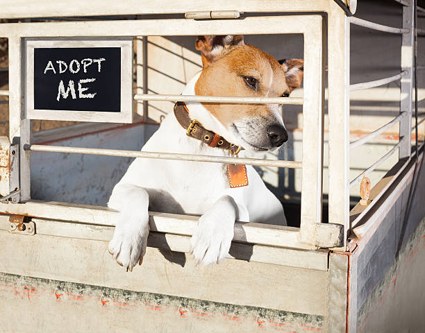 dog in shelter cage stock photo