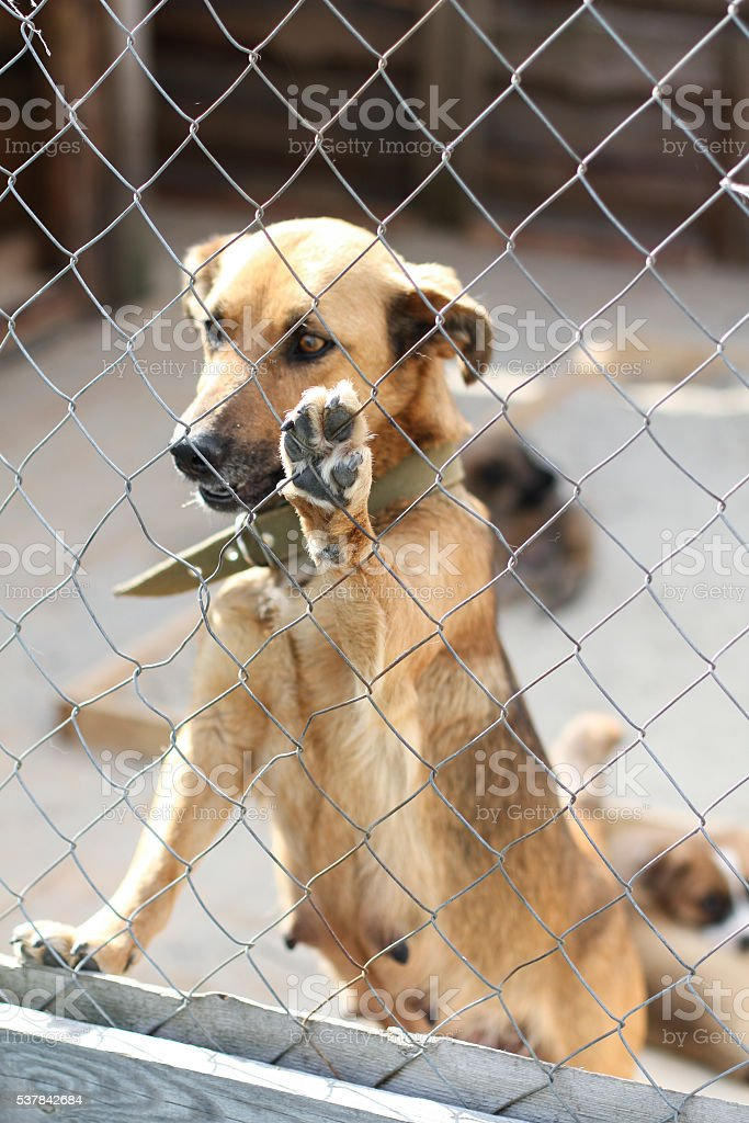 dog in shelter cages needs family stock photo