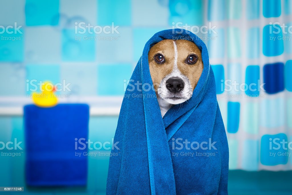 dog in shower  or wellness spa – Foto